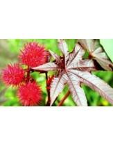 Aceite Ricino Castor Jabonarium 250ml